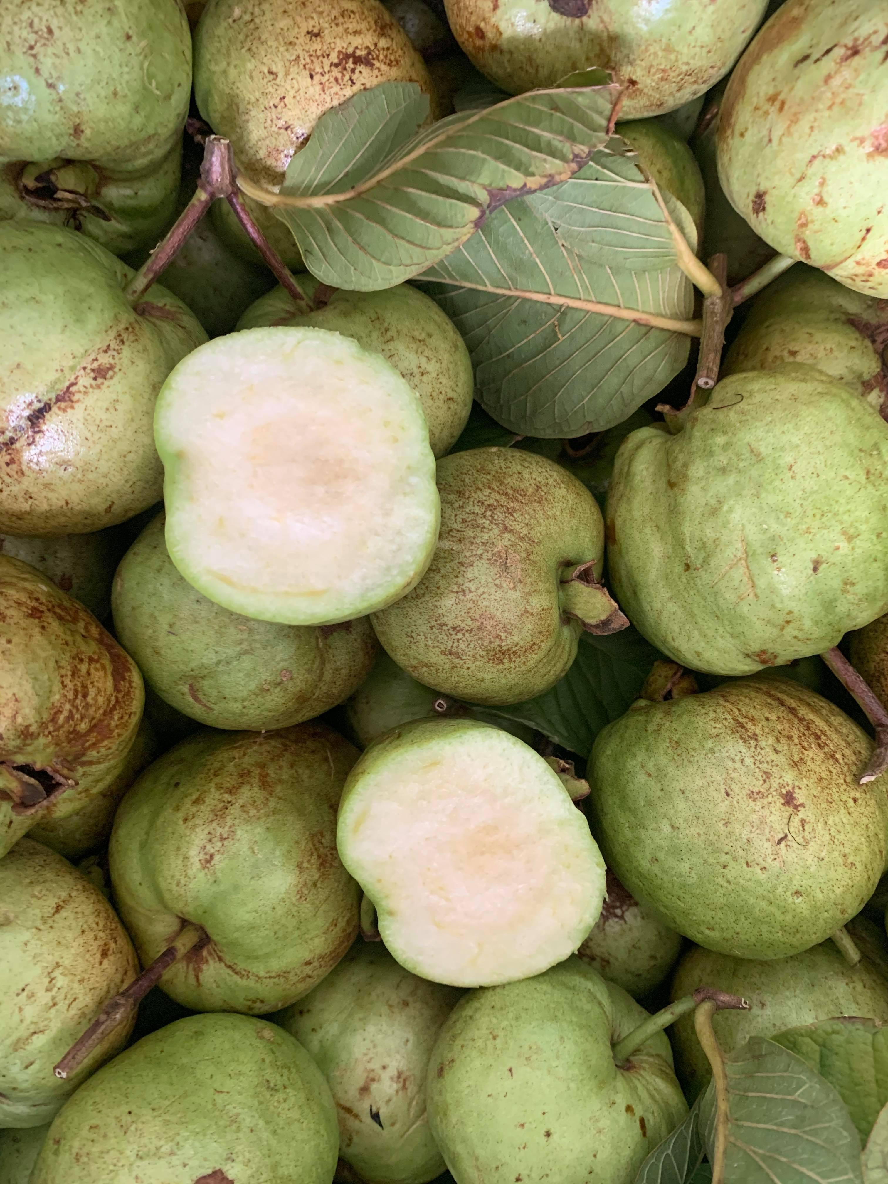 Guava fruit seedless / Ổi không hạt