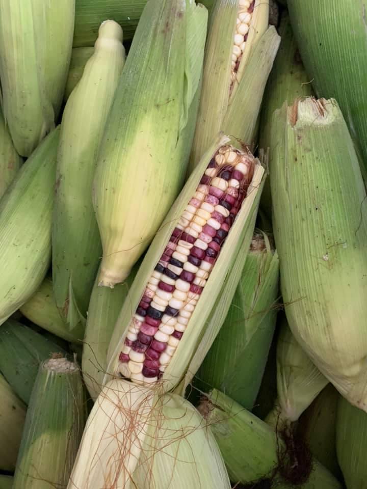 Corn /Bắp 10 Units